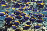 深海鱼群图片(78张)