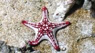 海星图片(7张)