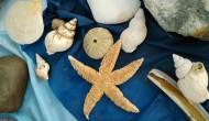 贝壳图片(6张)