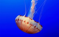海洋里各种奇妙的海底生物图片(14张)
