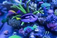 绮丽的海底世界图片(18张)