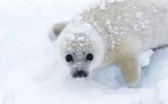 海狮图片(20张)