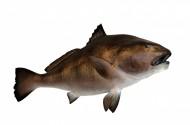 各种海鱼特写图片(14张)