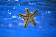 不同的海星图片(10张)