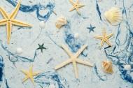 海星图片(17张)