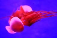 美丽的水母图片(10张)