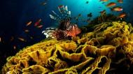 海底珊瑚礁图片(11张)