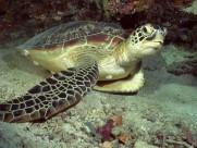 海底世界图片(24张)