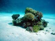 海底的珊瑚图片(15张)