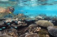 有趣的海底世界图片(15张)