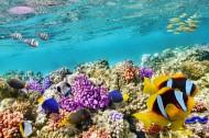 五彩斑斓的海洋鱼群图片(15张)