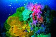 美丽海底珊瑚图片(24张)