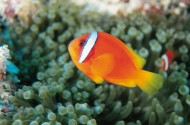 海洋鱼类生物特写图片(37张)