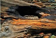 板岩图片(11张)