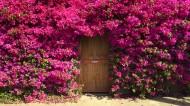 全世界各种有特色有爱的门图片(23张)
