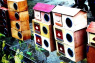 木制鸟屋图片(12张)