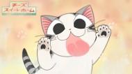 超级小萌猫起司猫图片(22张)
