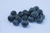 小巧的蓝莓图片(15张)
