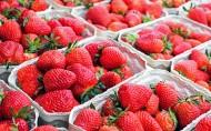 可口新鲜的草莓图片(16张)