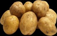 马铃薯透明背景PNG图片(15张)