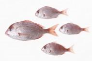 鱼类背景图片(7张)