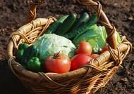 新鲜的蔬菜篮子图片(14张)