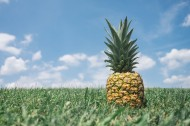 一个菠萝高清图片(12张)