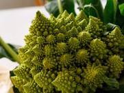 绿色的宝塔菜花图片(14张)