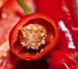鲜红的辣椒图片(23张)