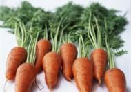 营养丰富的胡萝卜图片(15张)