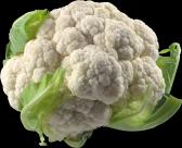 花椰菜透明背景PNG图片(15张)
