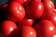 鲜红的西红柿图片(14张)