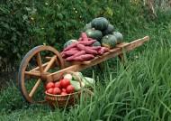 蔬菜丰收图片(71张)