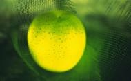 透光的水果图片(20张)