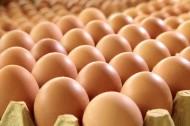 鸡蛋图片(11张)