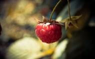 营养有益的树莓图片(28张)
