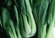 油菜图片(5张)