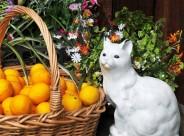 新鲜的柠檬图片(8张)