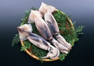 新鲜鱿鱼图片(4张)