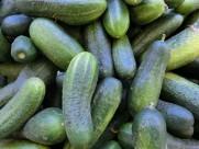 翠绿的黄瓜图片(14张)
