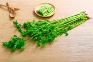 绿色有机芹菜图片(8张)
