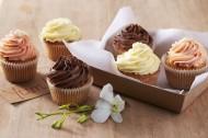 奶油小蛋糕图片(15张)