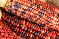 颜色各异的玉米图片(9张)