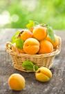 新鲜的杏子图片(9张)