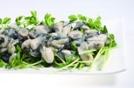 海鲜贝类图片(23张)