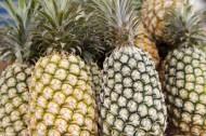菠萝图片(7张)