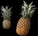 菠萝透明背景PNG图片(15张)