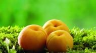 嫩黄的甜杏图片(6张)