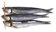 鱼干图片(6张)