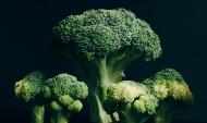 健康营养西兰花图片(14张)
